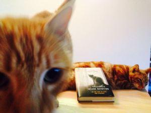 Un selfie de Maqui, mi gato huraño, y el rey Qori.